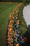 Schöne Tulpen am Lago Maggiore im Frühlingsgarten