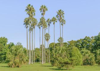 Montevideo Botanical Garden
