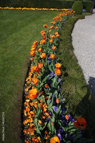 In de dag Pansies Schöne Tulpen am Lago Maggiore im Frühlingsgarten