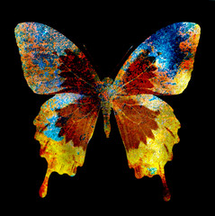 illustration of a  color butterfly, mixed medium, black