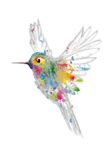 """Постер, картина, фотообои """"Kolibri"""""""