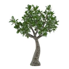 Exotic plant tree
