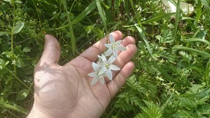 Eldeki beyaz çiçekler