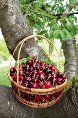 panier de cerises rouges