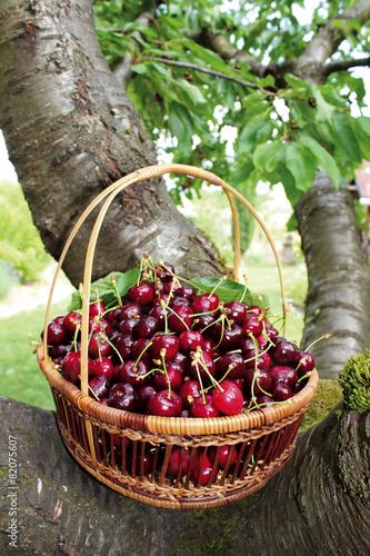 panier de cerises rouges © kazy