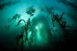 Leinwanddruck Bild - Kelp and Sunlight
