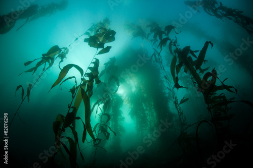 Staande foto Water planten Kelp and Sunlight