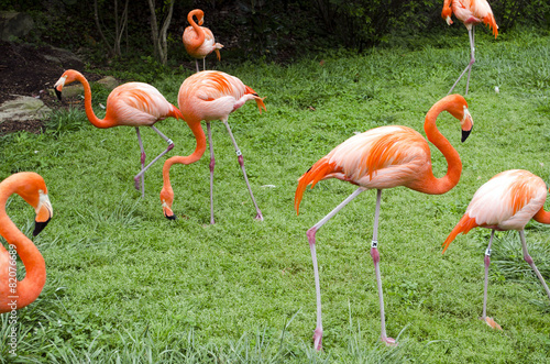 Foto op Aluminium Flamingo flamingos feeding in the grass