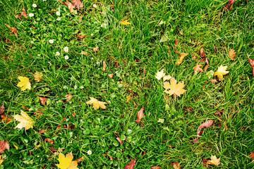 Autumn fall grass background