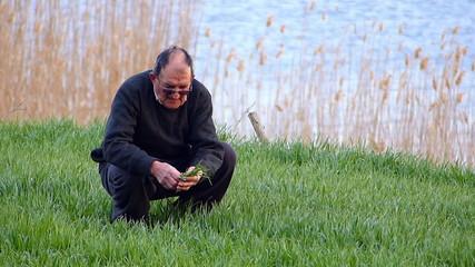 Senior farmer checking wheat in spring