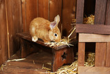 Fototapety Cute rabbit in barn, close up