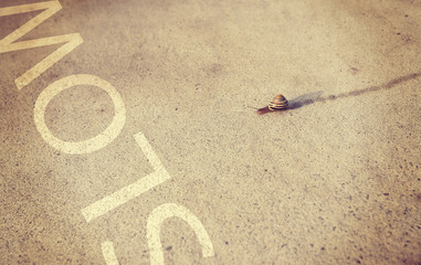 snail moving along sidewalk with instagram filter