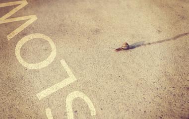 snail moving along sidewalk with instagram filter