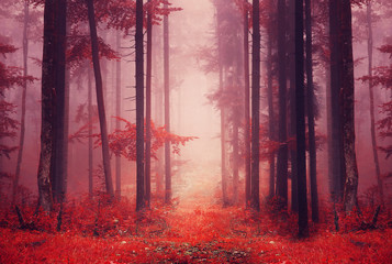 Red colored foggy forest path © robsonphoto