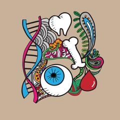 Identification organs color