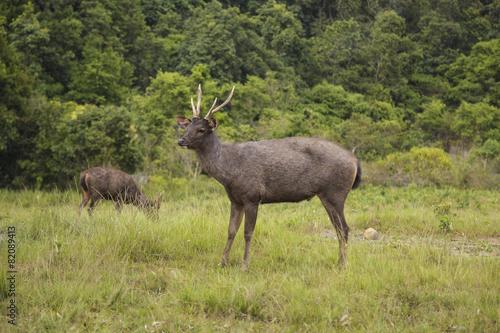 Fotobehang Antilope Antelope