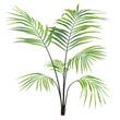 Palm plant tree isolated - 82091651