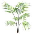 Leinwanddruck Bild - Palm plant tree isolated