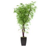 plant bush in the pot