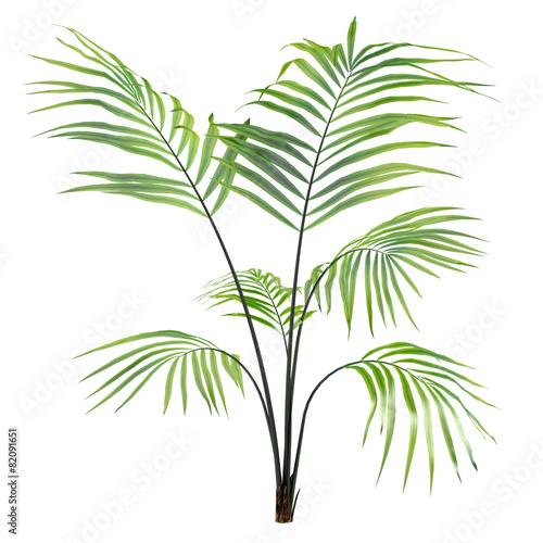 Leinwanddruck Bild Palm plant tree isolated