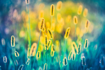 Yellow And Blue Summer Grass Meadow Close-Up With Bright Sunligh