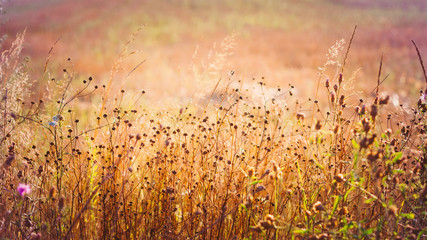 Yellow Dry Autumn Grass On Meadow. Toned Instant Photo
