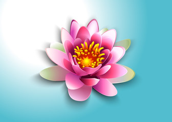 vector illustration water lily