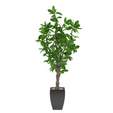 Plant tree in the pot