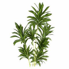 Palm plant bush