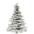 Winter fir-tree on snow isolated - 82093041