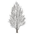 Leinwanddruck Bild - Winter tree on snow isolated