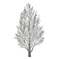 Winter tree on snow isolated