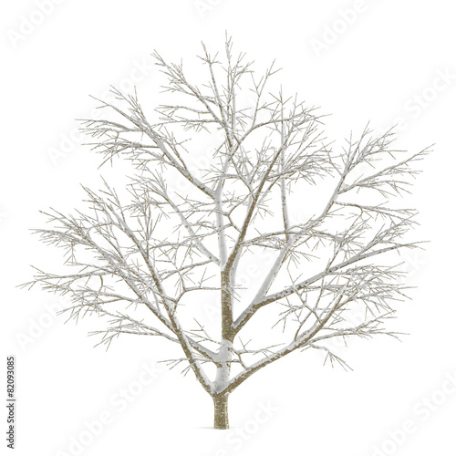 Winter tree on snow isolated - 82093085