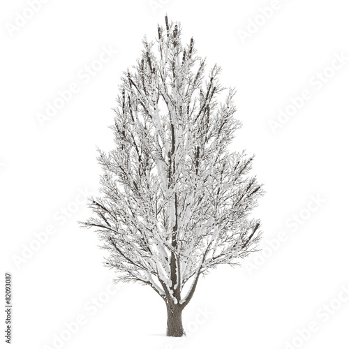 Winter tree on snow isolated - 82093087