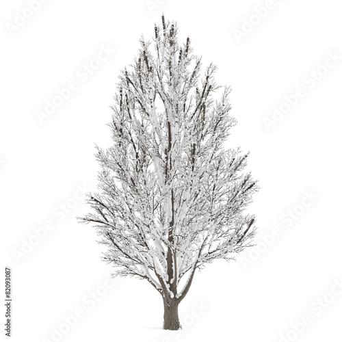 Leinwanddruck Bild Winter tree on snow isolated