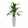 plant isolated in the pot - 82093850