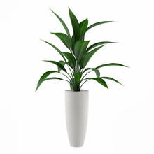 """Постер, картина, фотообои """"plant isolated in the pot"""""""