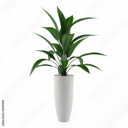 obraz lub plakat plant isolated in the pot