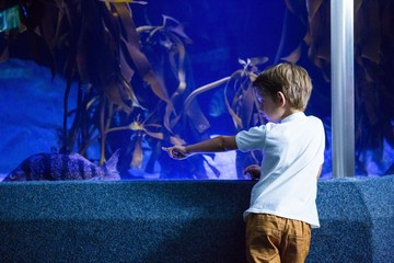 Young man focusing a big fish in a tank