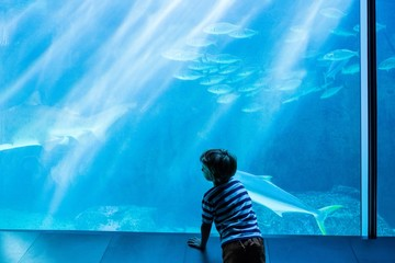 Young man looking at fish in a giant tank