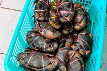 Fresh Thai sea crab in basket