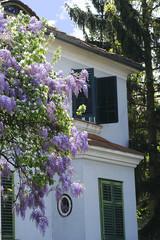 Haus mit Glyzinien