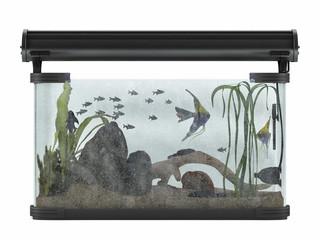 Aquarium isolated