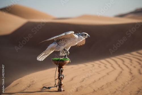Fotobehang Midden Oosten Falcon on a leash in a desert