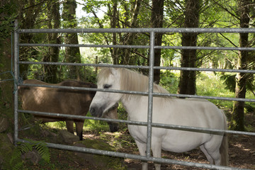 brown and a white pony behind a gate