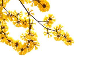 Yellow flower blooming in spring season