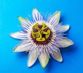 Passion  flower - passiflora