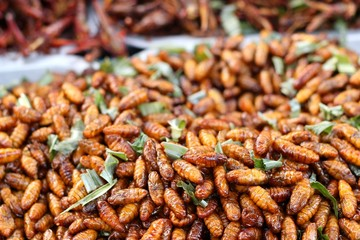 fried silk worms in the market