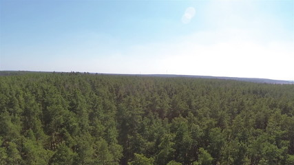 Coniferous green forest. Aerial  lateral flight
