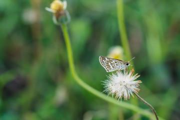 Small Butterfly on a flower grass